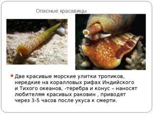Опасные красавицы Две красивые морские улитки тропиков, нередкие на коралловы