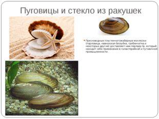 Пуговицы и стекло из ракушек Пресноводные пластинчатожаберные моллюски (перло