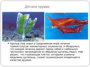 Детское оружие Адольф Нэф ловил в Средиземном море личинок тремоктопусов- мин