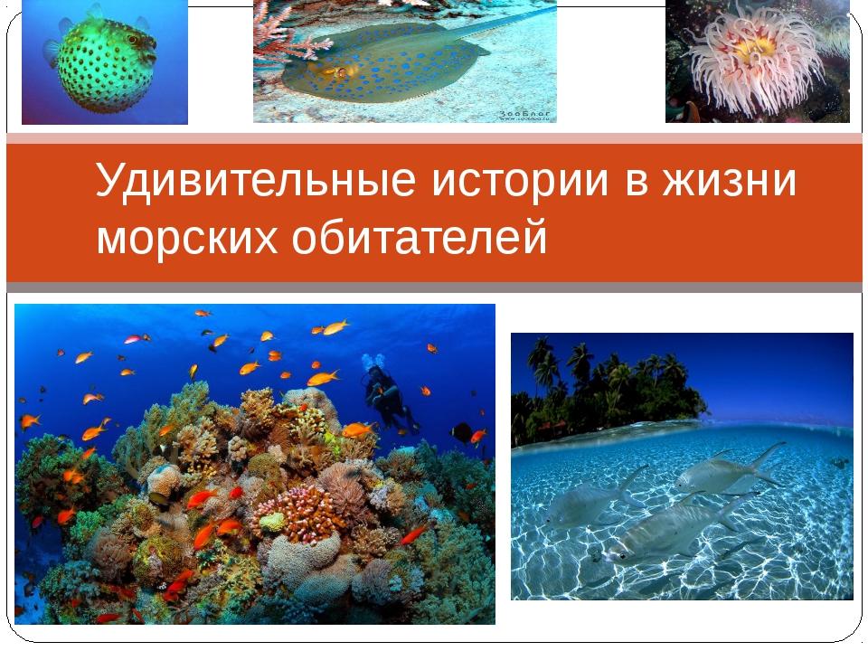 Удивительные истории в жизни морских обитателей
