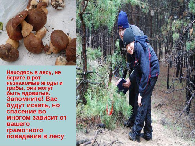 Находясь в лесу, не берите в рот незнакомые ягоды и грибы, они могут быть ядо...