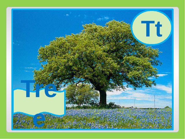 Tt Tree Tt