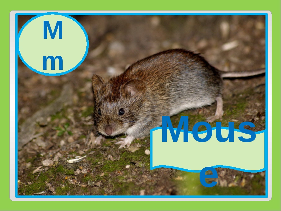 Mm Mouse Mm