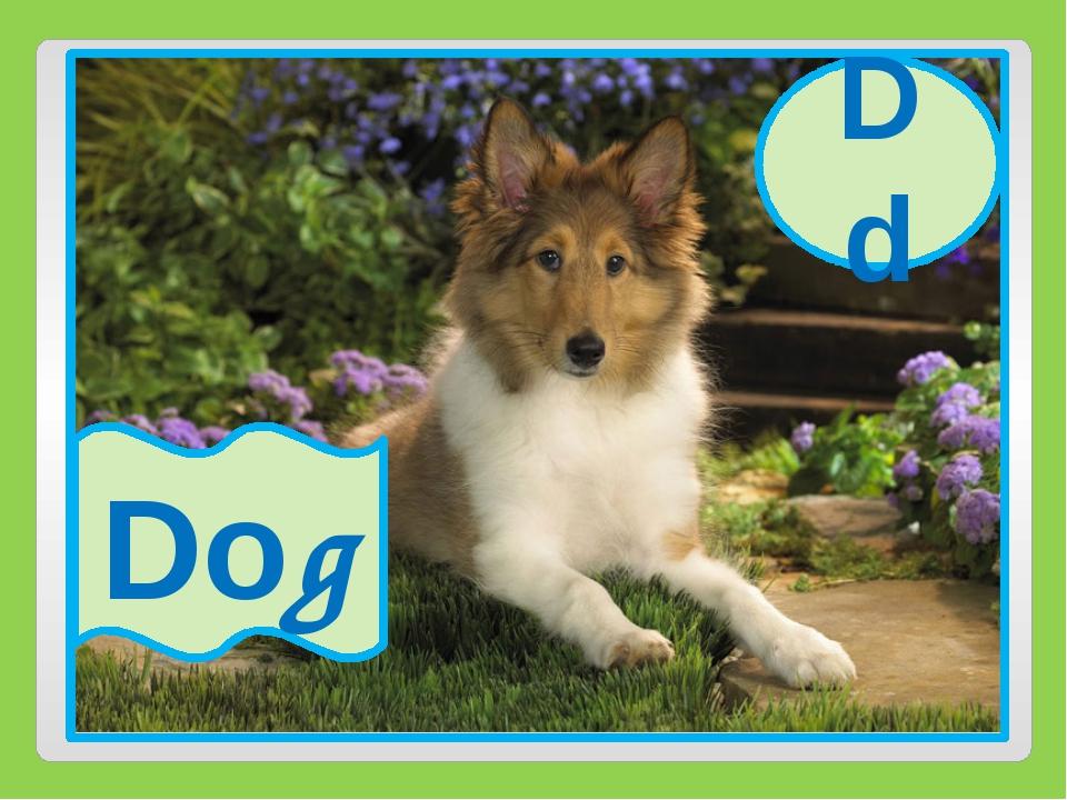 Dd Dog Dd