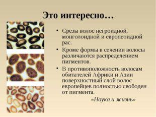 Это интересно… Срезы волос негроидной, монголоидной и европеоидной рас. Кроме