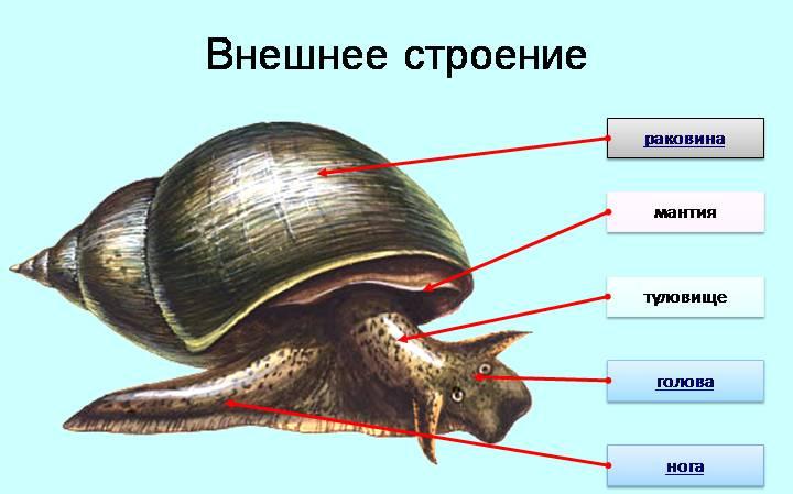 http://mrmarker.ru/p/allpic/32/13388-img_4.jpg