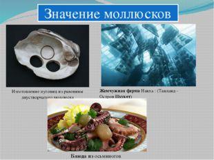 Значение моллюсков Изготовление пуговиц из раковины двустворчатого моллюска
