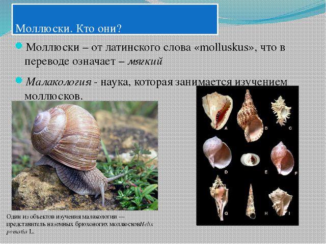 Моллюски. Кто они? Моллюски – от латинского слова «molluskus», что в перевод...