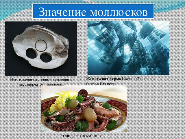 Значение моллюсков Изготовление пуговиц из раковины двустворчатого моллюска...
