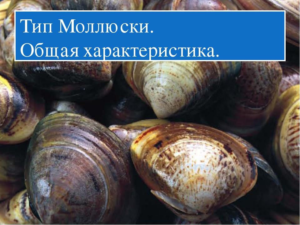 Тип Моллюски. Общая характеристика.