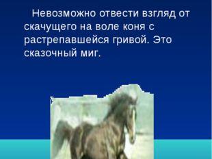 Остановись, мгновение! Невозможно отвести взгляд от скачущего на воле коня с