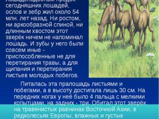 Эволюция. Самый древний лошадеподобный предок сегодняшних лошадей, ослов и зе
