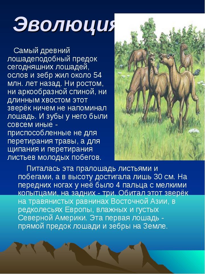Эволюция. Самый древний лошадеподобный предок сегодняшних лошадей, ослов и зе...