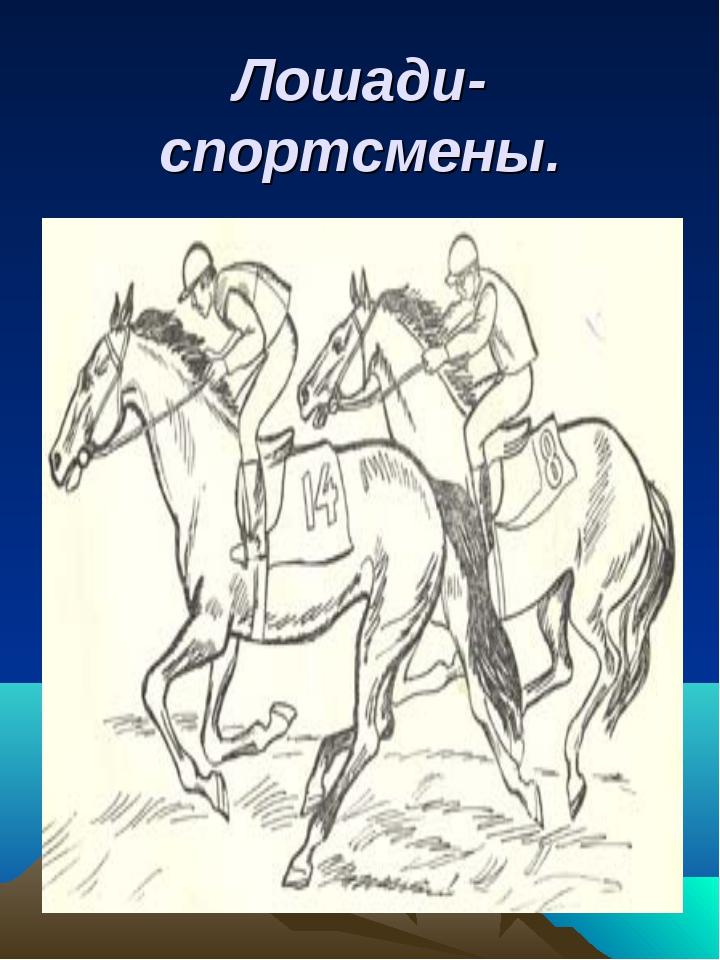 Лошади-спортсмены.