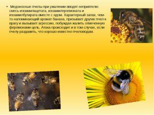 Медоносные пчелы при ужалении вводят неприятелю смесь изоамилацетата, изоами