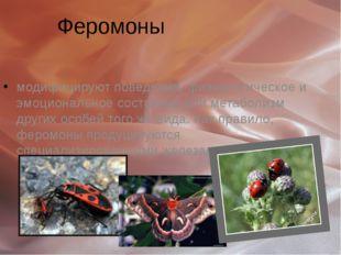 Феромоны Феромо́ны (греч. φέρω — нести + ορμόνη — побуждать, вызывать) модифи