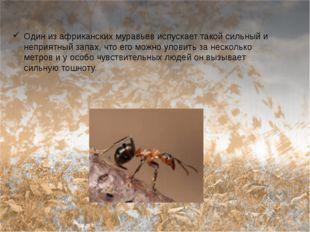 Один из африканских муравьев испускает такой сильный и неприятный запах, что