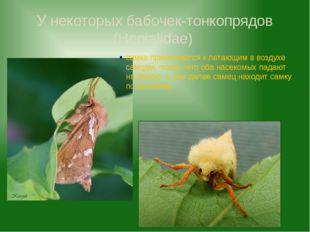 У некоторых бабочек-тонкопрядов (Hepialidae) самка привлекается к летающим в