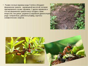 Рыжие лесные муравьи рода Formica обладают феромоном тревоги - муравьиной ки