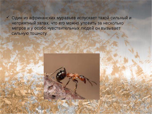 Один из африканских муравьев испускает такой сильный и неприятный запах, что...