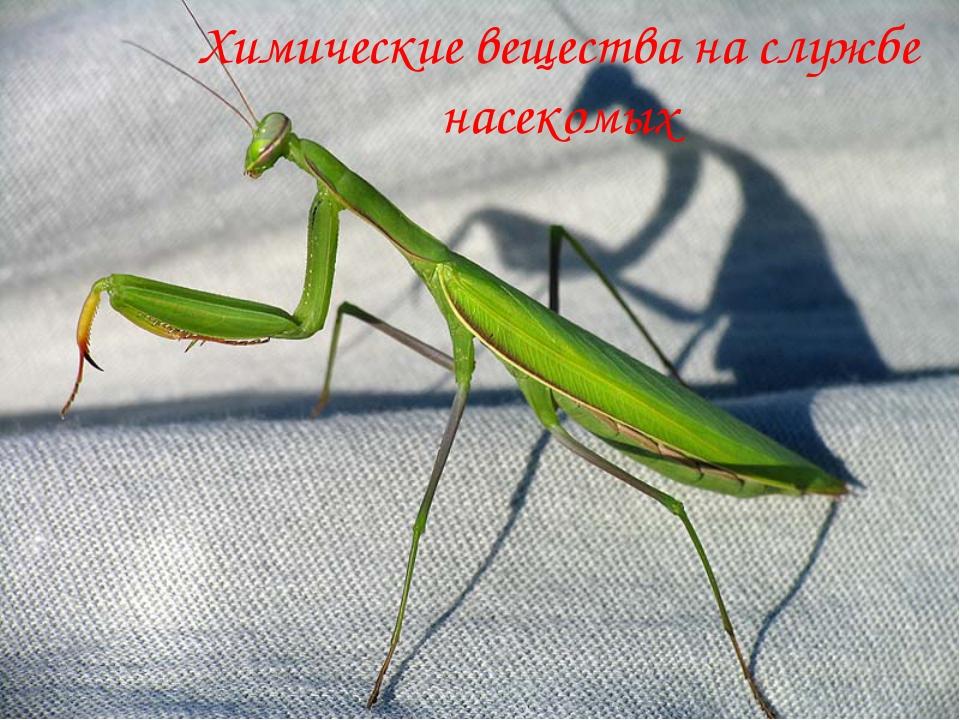 Химические вещества на службе насекомых