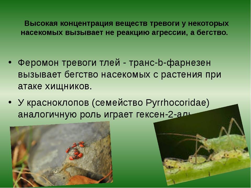 Высокая концентрация веществ тревоги у некоторых насекомых вызывает не реакц...
