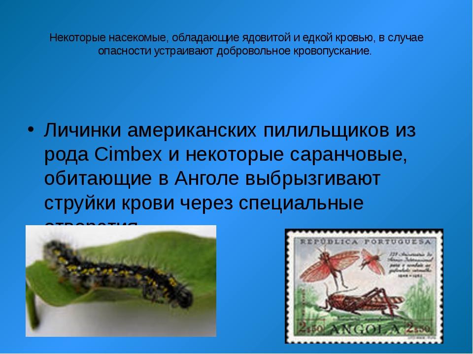 Некоторые насекомые, обладающие ядовитой и едкой кровью, в случае опасности у...