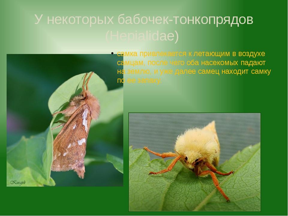 У некоторых бабочек-тонкопрядов (Hepialidae) самка привлекается к летающим в...