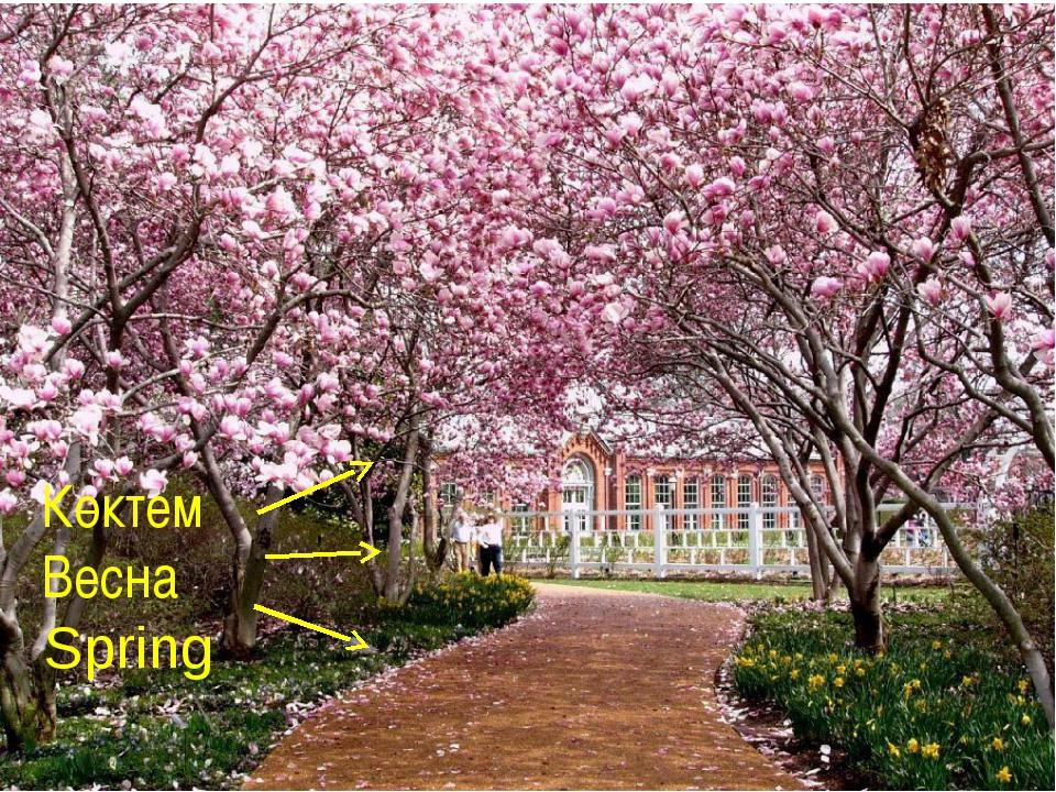 Көктем Весна Spring