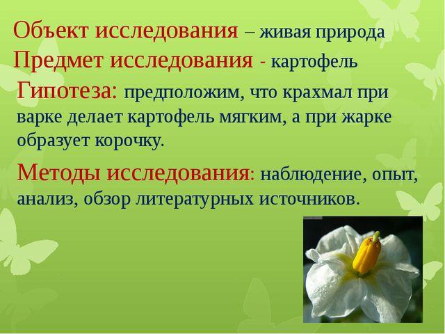 Объект исследования – живая природа Предмет исследования - картофель Гипотез...