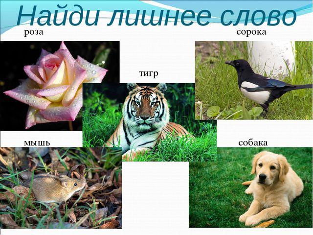 Найди лишнее слово роза сорока тигр мышь собака собака