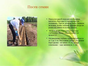 Посев семян Перед посадкой моркови необходимо выкопать бороздки и хорошенько