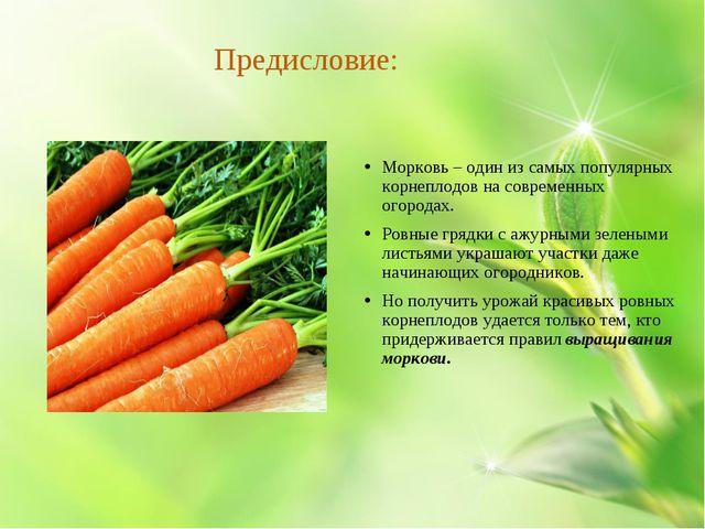 Предисловие: Морковь – один из самых популярных корнеплодов на современных о...