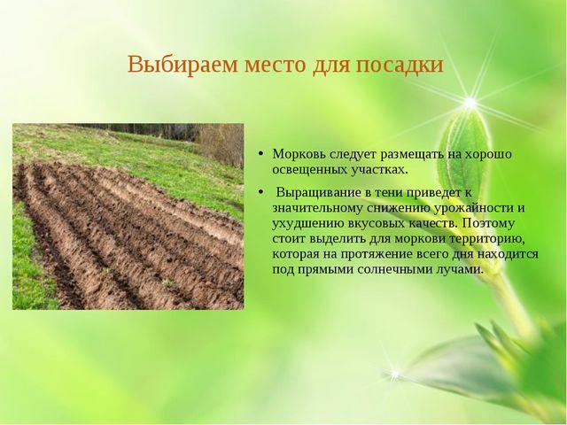 Выбираем место для посадки Морковь следует размещать на хорошо освещенных уч...