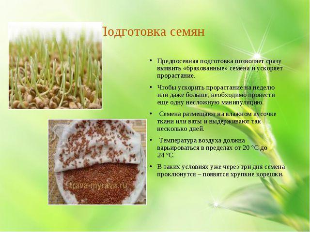 Подготовка семян Предпосевная подготовка позволяет сразу выявить «бракованны...