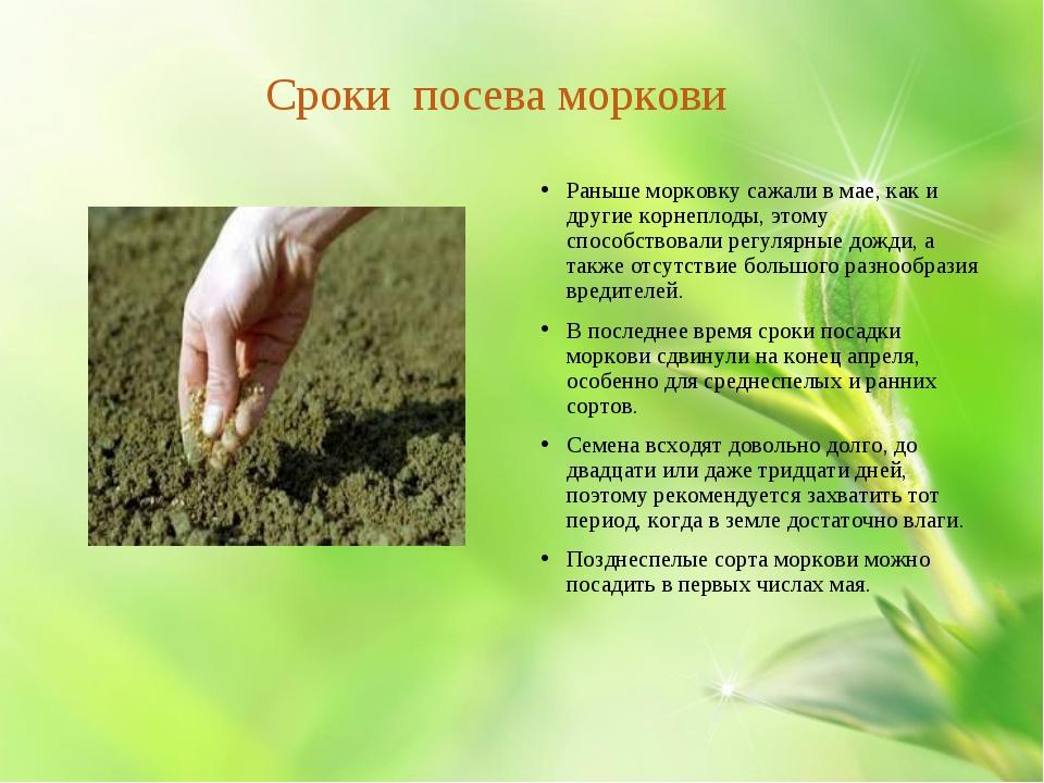 Сроки посева моркови Раньшеморковку сажалив мае, как и другие корнеплоды,...