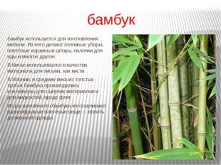 бамбук Бамбук используется для изготовления мебели. Из него делают головные у