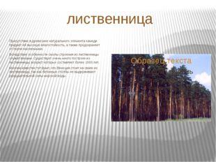 лиственница Присутствие в древесине натурального элемента камеди придает ей в