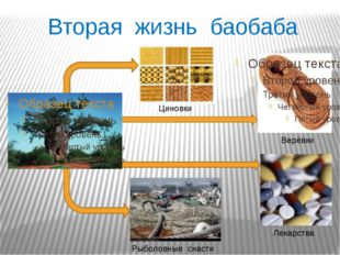 Вторая жизнь баобаба Верёвки Лекарства Рыболовные снасти Циновки
