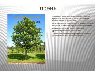 ясень Древесина ясеня, благодаря своей упругости и прочности, использовалась