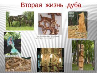 Вторая жизнь дуба Дуб используется для изготовления скульптурных резных издел