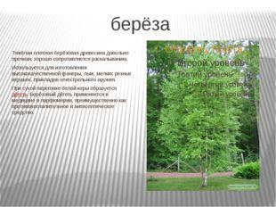 берёза Тяжёлая плотная берёзовая древесина довольно прочная, хорошо сопротивл