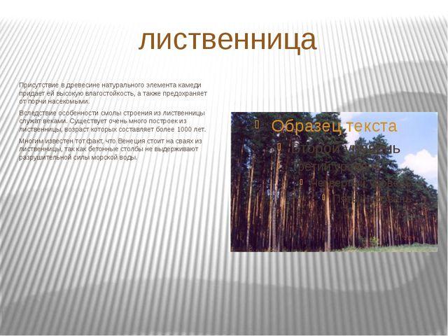лиственница Присутствие в древесине натурального элемента камеди придает ей в...