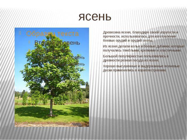 ясень Древесина ясеня, благодаря своей упругости и прочности, использовалась...