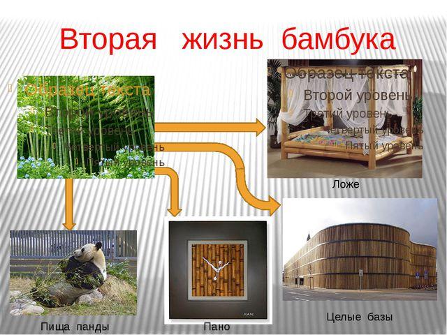 Вторая жизнь бамбука Целые базы Пано Ложе Пища панды