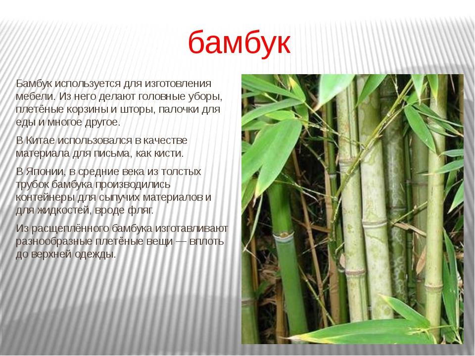 бамбук Бамбук используется для изготовления мебели. Из него делают головные у...