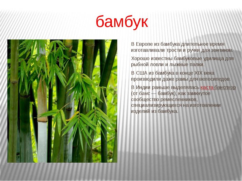 В Европе из бамбука длительное время изготавливали трости и ручки для зонтико...