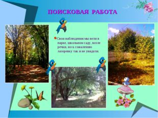 ПОИСКОВАЯ РАБОТА Свои наблюдения мы вели в парке, школьном саду, возле речки,