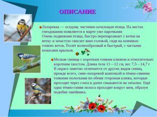 ОПИСАНИЕ Лазоревка — оседлая, частично кочующая птица. На местах гнездования