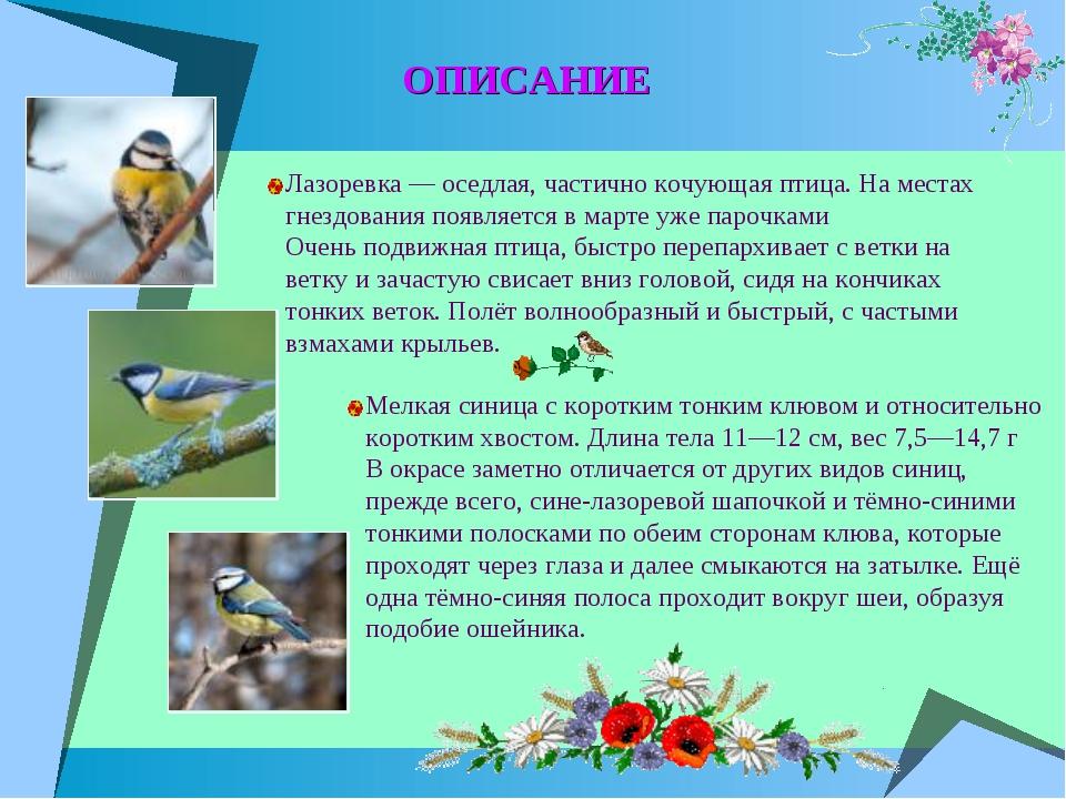 ОПИСАНИЕ Лазоревка — оседлая, частично кочующая птица. На местах гнездования...